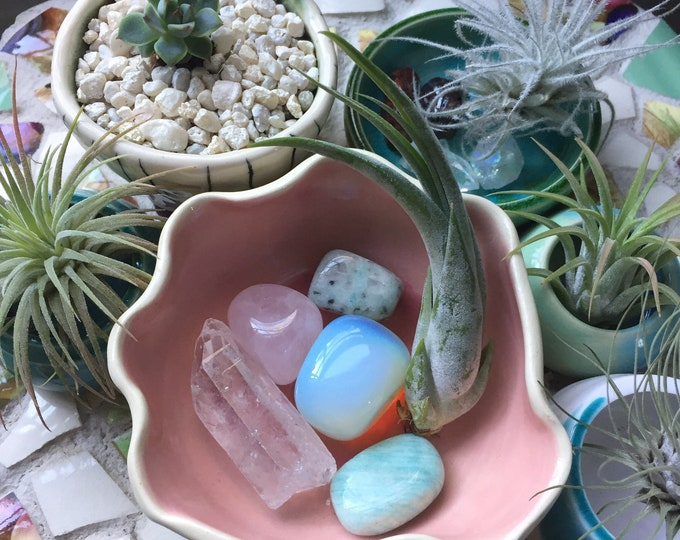 Reiki Love | Peace + Calm | Quartz, Rose Quartz, Amazonite, Sesame Jasper, Opalite + Air Plant | Mermaid Shell | Spiritual Junkies | Altar