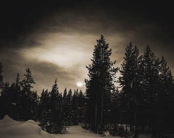 Yellowstone National Park, Fine Art Landscape, Yellowstone in Winter, Trees, Sepia, Pine Trees in Snow, Winter Landscape,  Darkness Falls