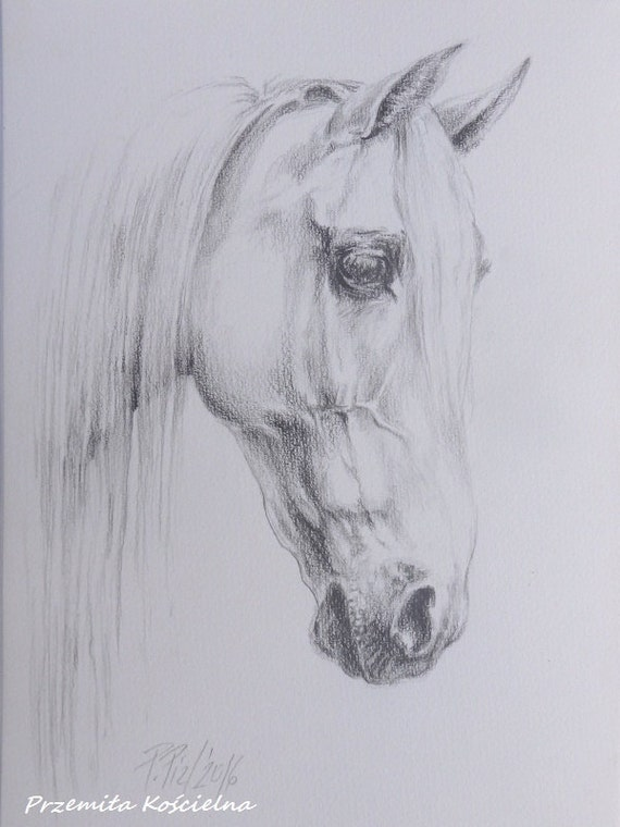 Pferd Portrat Graphit Bleistift Zeichnung Pferd Kopf Original Etsy