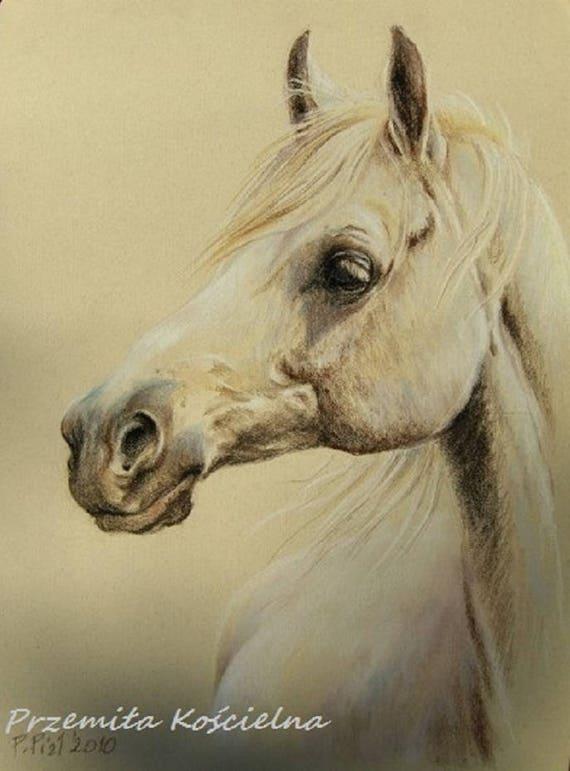 Equine Art Drawings