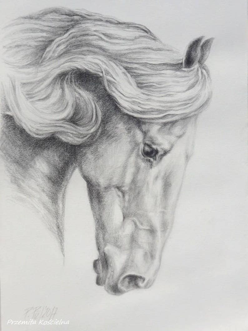 Friesian horse pencil drawing on white paper hand drawn horse portrait black and white horse head equestrian art gift for horse lover