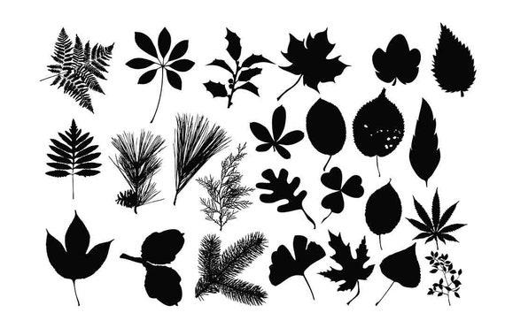 Leaf Silhouette Leaves Clipart Botanical Clip Art Leaf Svg Etsy