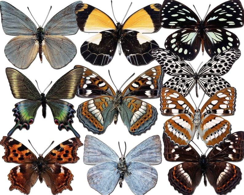 Black Butterfly Butterfly Clipart Butterfly Scrapbook Printable butterfly Buy 2 Get 1 Free Realistic Butterfly Butterflies Clip Art