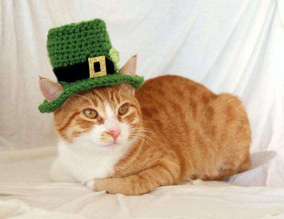 Image result for saint patrick's day cats
