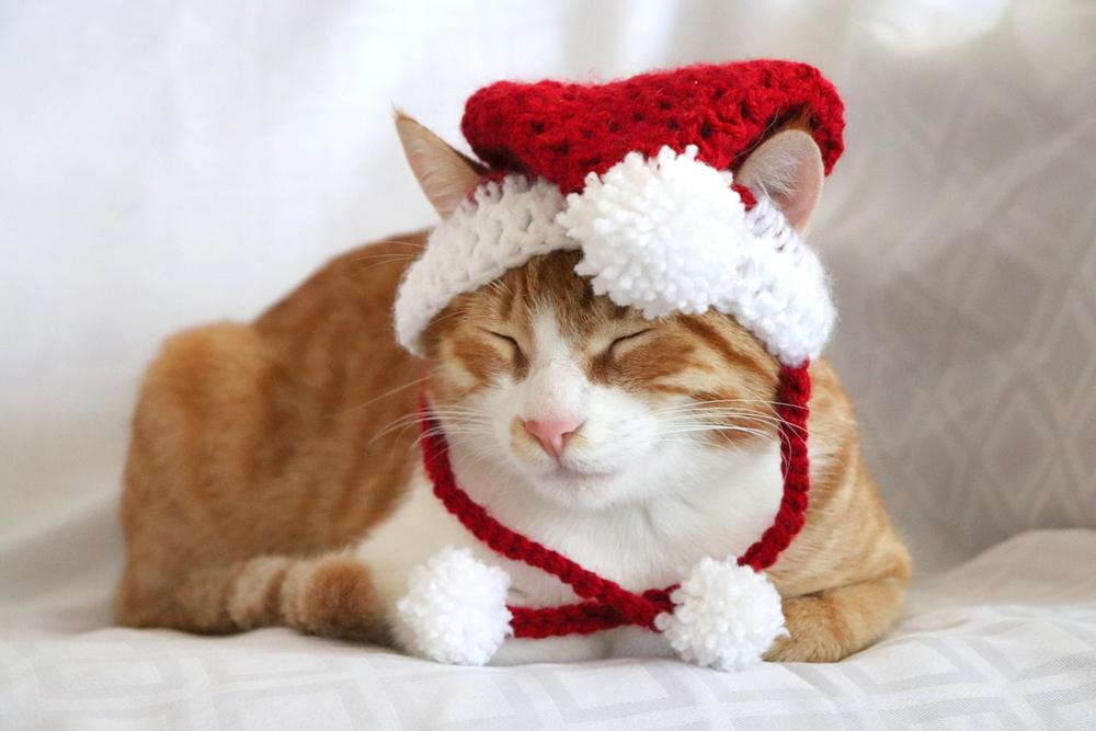 7dc091ee5fb Santa Hat for Cats Cat Santa Hat Holiday Cat Hat Christmas
