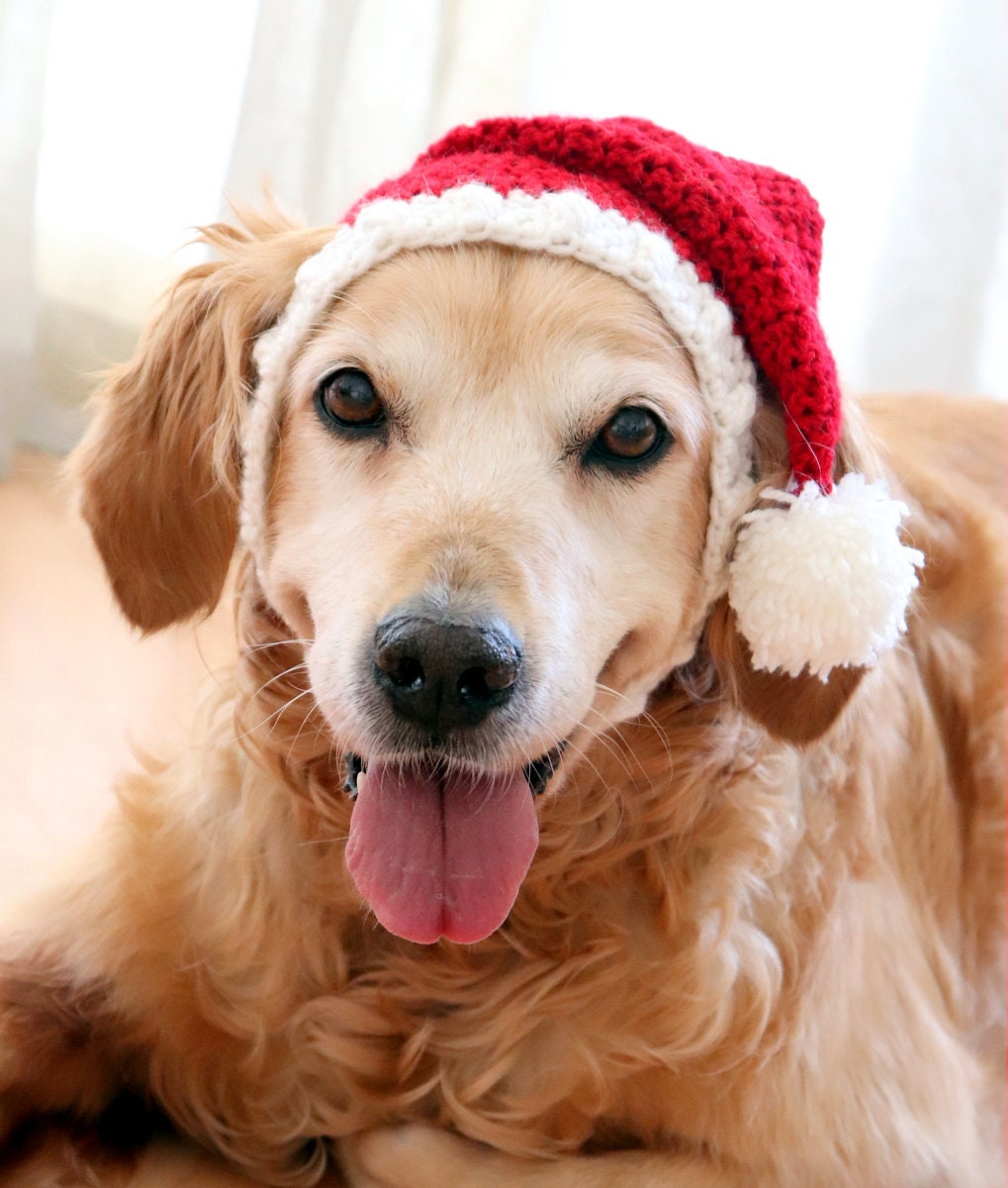 Santa Hat For Dogs Dog Santa Hat Holiday Dog Hat Christmas Etsy