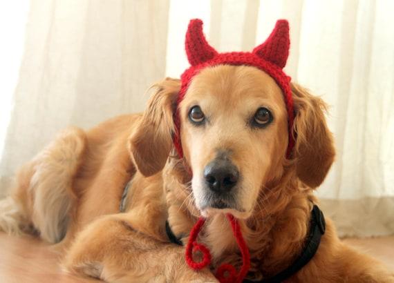 Golden Retriever wearing crocheted red devil horns.