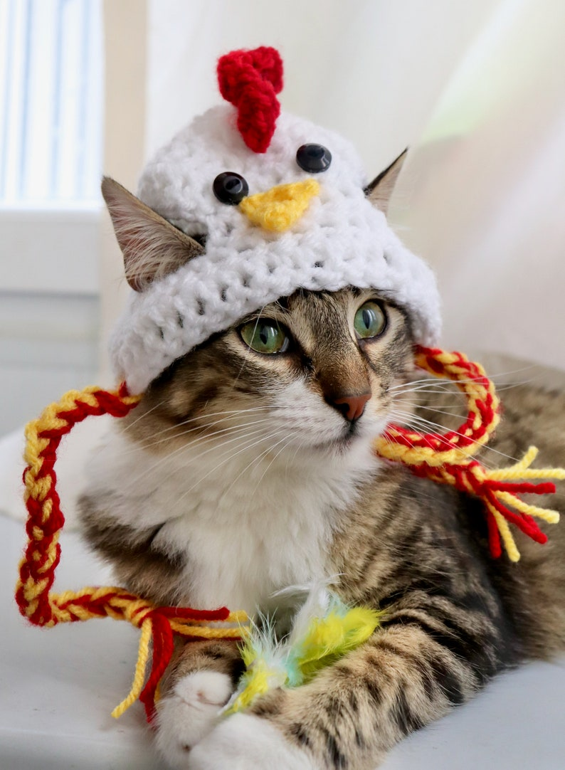 Chicken Hat for Cats | Stay at Home Mum