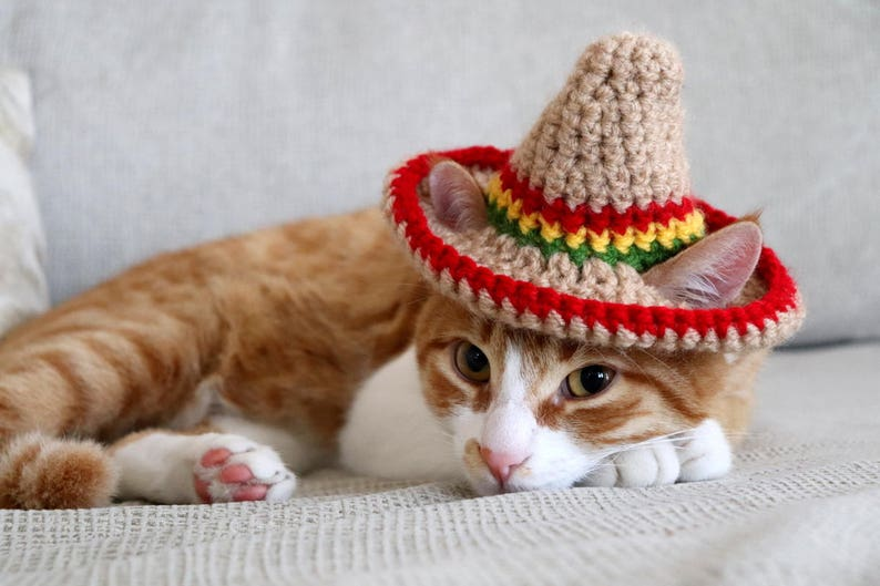 The Cat Sombrero Ridiculously Cute Hats for Cats | Stay at Home Mum