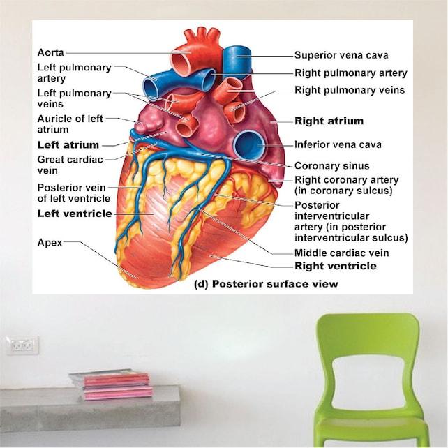 Anatomía de un corazón etiqueta de Mural de la pared etiqueta | Etsy