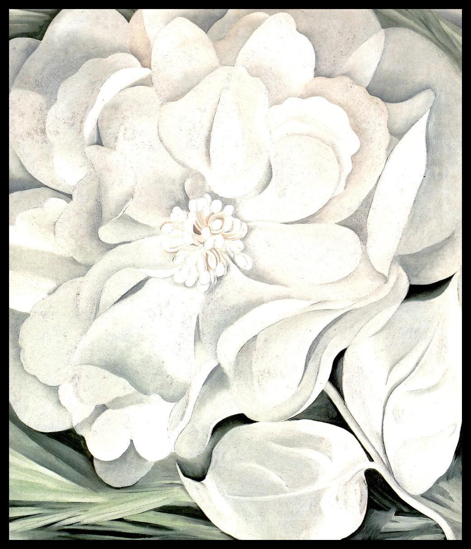 1931 Georgia Okeeffe Print The White Calico Flower Oil Etsy