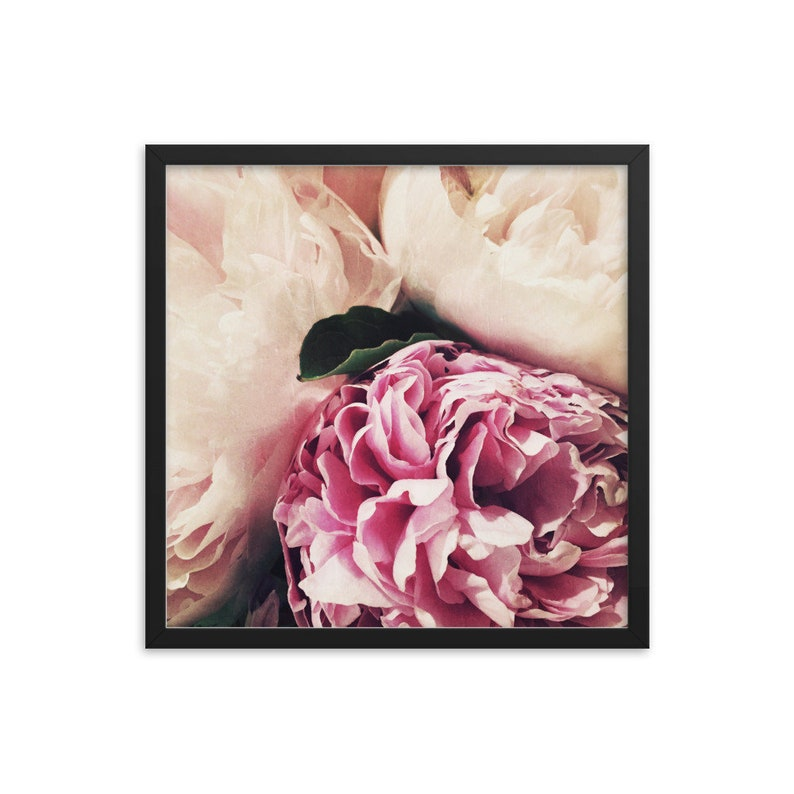 Soft Pastel Peonies framed square matte photograph of summer garden flowers