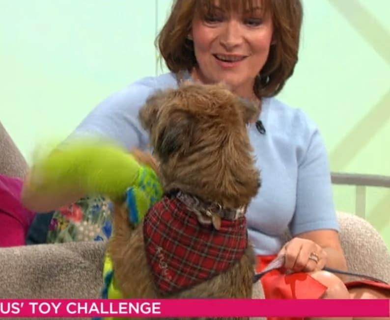 Spoilt Rotten Pets Red Tartan Scottish Royal Stewart Kilt Dog Bandana Any Name Custom Printed Personalised Pet Gift Accessory Scarf Dog Cat
