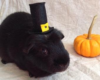 Pilgrim Hat For Guinea Pigs