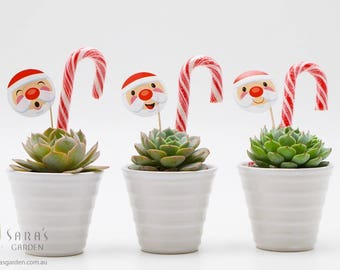 Succulent Christmas Gift In White Pot Corporate Thank You Gift Unique Christmas Gifts Xmas Gift Office Party Favour Minimum Order 20
