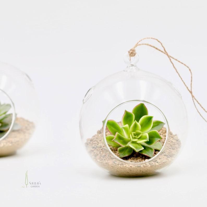 Succulent Glass Terrarium Wedding Favour Bombonieres Hanging Etsy