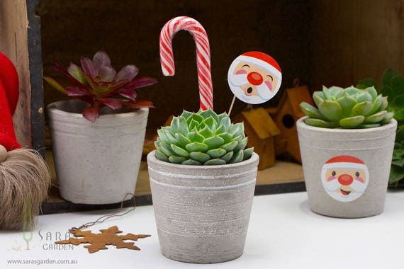 Corporate Christmas Gifts.Succulent Christmas Gift Corporate Gift For Employees Unique Christmas Gifts Australia Xmas Gift Office Party Favour Minimum Order 15