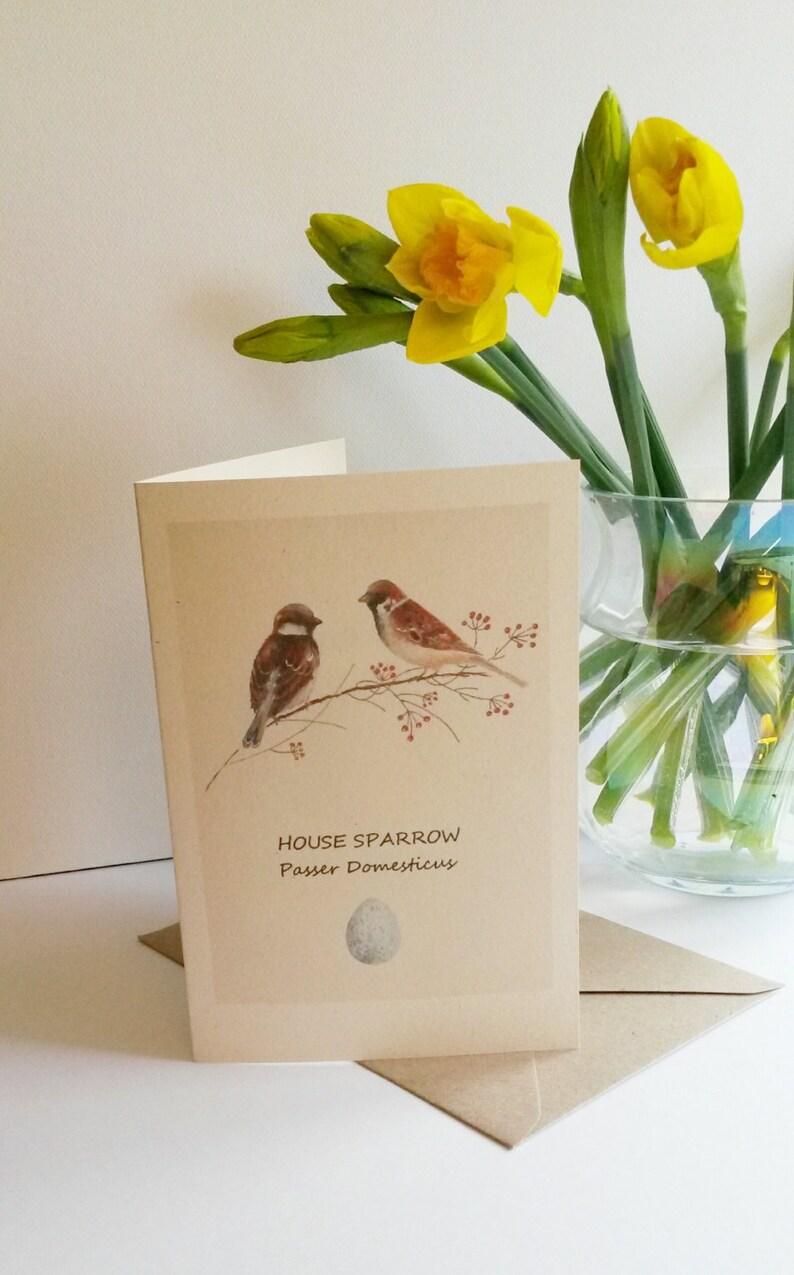 Sparrow with their egg and scientific name  British birds  Sparrow card   Sparrow image  Card with a sparrow  Bird card  English sparrow