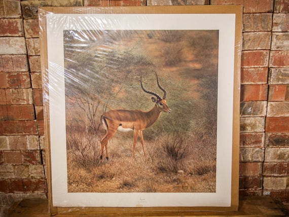 Vintage Charles Frace Impala Signed Numbered Limited Edition Print The Frame House Gallery Artwork Wildlife Nature Fine Art