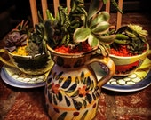 Spanish Table succulent Decoration for Fiesta Party. Succulents will vary