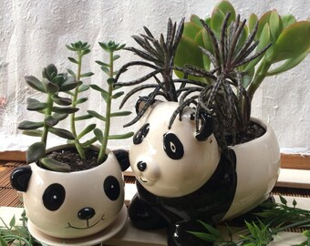 "Mother Panda Bear with panda baby/gift/ceramic /succulent or plant request baby sold seperate measure mom pot 5"" long 5"" high"