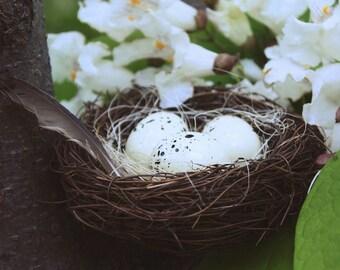 """Original Bird Nest Photo Print """"Reliant on Hope"""" - Home Decor"""