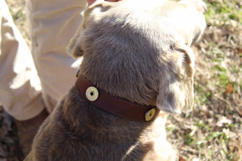 Shotgun shell leather dog collar image 0