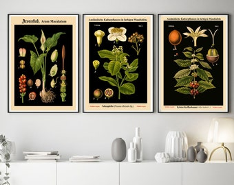 Botanical Kitchen   Etsy