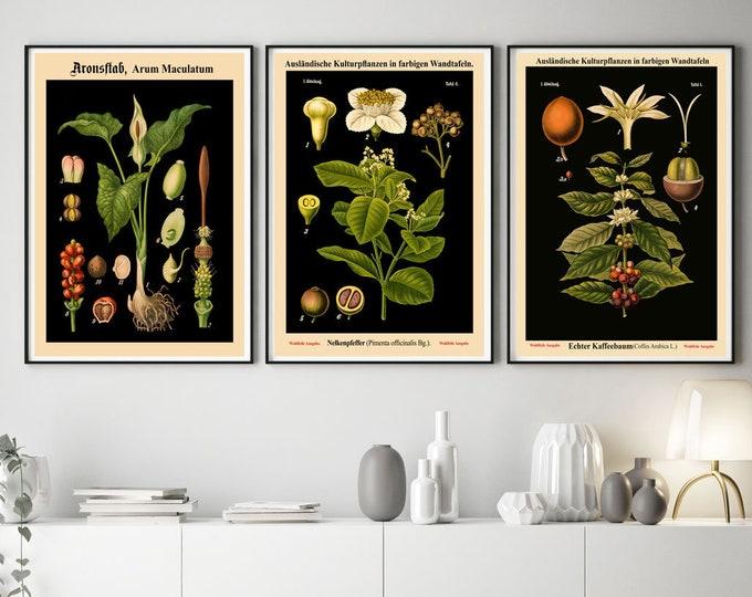 Rare Botanical Posters Set of 3 Black Botanical Prints Botanical Kitchen Decor Botanical Art Kitchen Art Plant Posters Eco Art WBBLOT-1-3-6