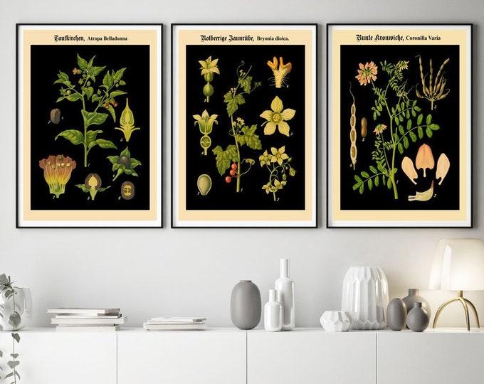 Botanical Prints for Kitchen Set of 3 German Botanical Art Prints