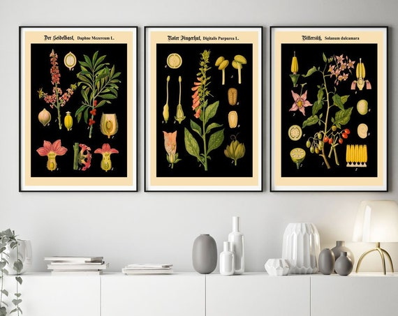 Botanical Posters Set of 3 German Botanical Prints on Black Background WB15-17-19