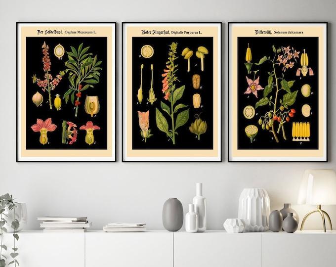 Botanical Posters Set of 3 German Botanical Prints on Black Background WB15-17-19