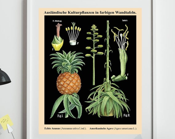 Pineapple Botanical Print Pineapple Decor Vintage Pineapple Wall Art WBBOT32