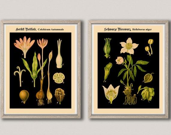 Black Botanical Prints Set of 2 Rare German Botanical Charts Botanical Decor Set Botany Art Deutsche Botanische School Charts WBBLOT7-8