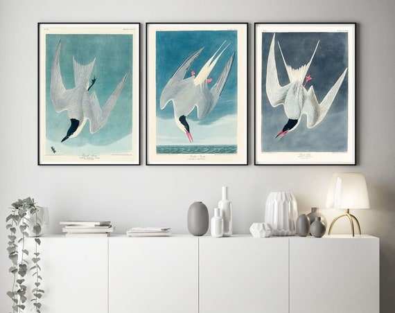 Audubon Birds Illustrations John James Audubon Set of 3 Audubon Paintings Marsh Tern Arctic Tern Great Tern Print American Birds WBAUD1-2-9