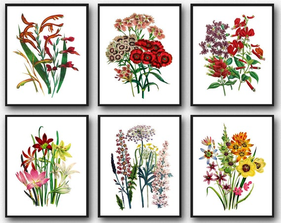 Red Flower Botanical Prints Red Botanical Art Flower Botanical Art Set of 6 Wildflower Prints Wildflower Decor Red Decor WBOT113-WBOT118