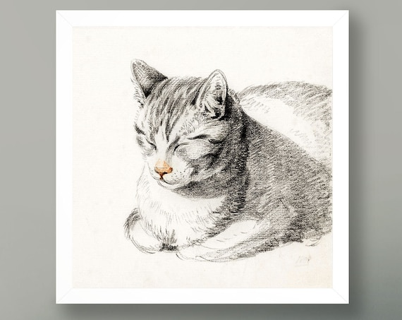 Cat Illustration Vintage Cat Poster Square Cat Art