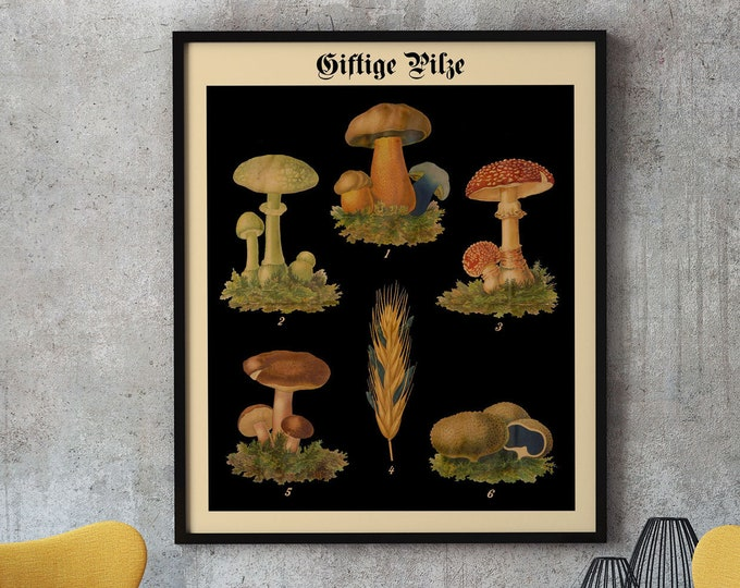Mushroom Botanical Art German Botanical Art Botanical on Black Vintage Wall Chart Vintage Chart Die Giftpflanzen Deutschlands WB-BLBOT-4