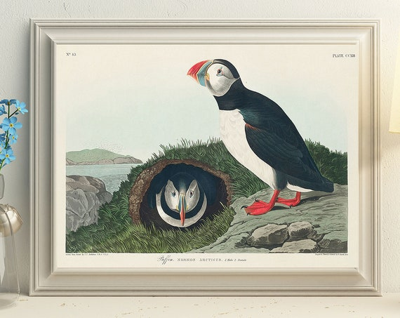Puffin Wall Art Puffin Print Puffin Wildlife Art Puffin Illustration
