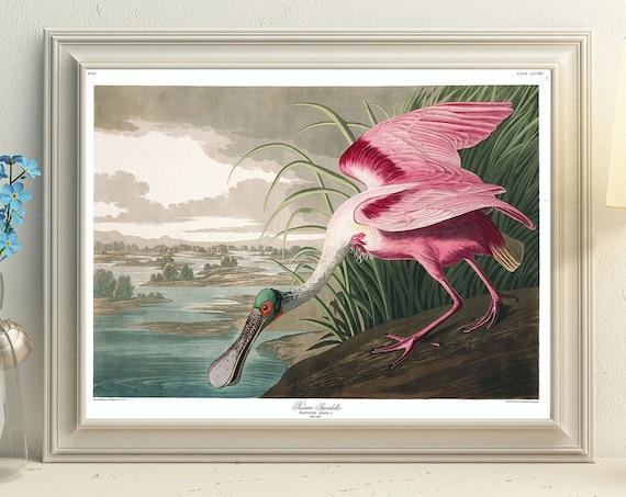 Roseate Spoonbill by John James Audubon Pink Duck Wall Art