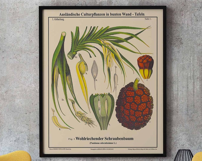 Botanical Educational Chart Screw-Pine Plant German Chart