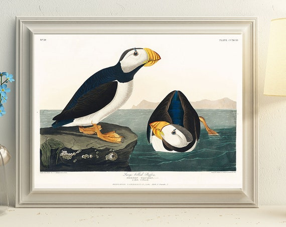 Puffin Posters Puffin Wall Art Puffin Prints Puffin Illustration