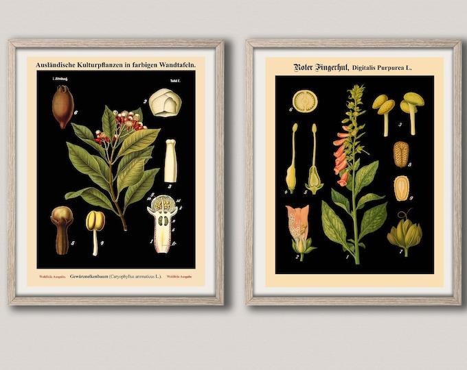 Rare German Educational Botanical Charts - Set of 2 Vintage Botanical School Charts - European Chart