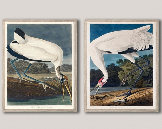 Audubon Prints Set of 2 Wildlife Illustration Art Hooping Crane and Wood Ibiss from Birds of America Wall Decor Birds Wall Decor WBAUD5-6