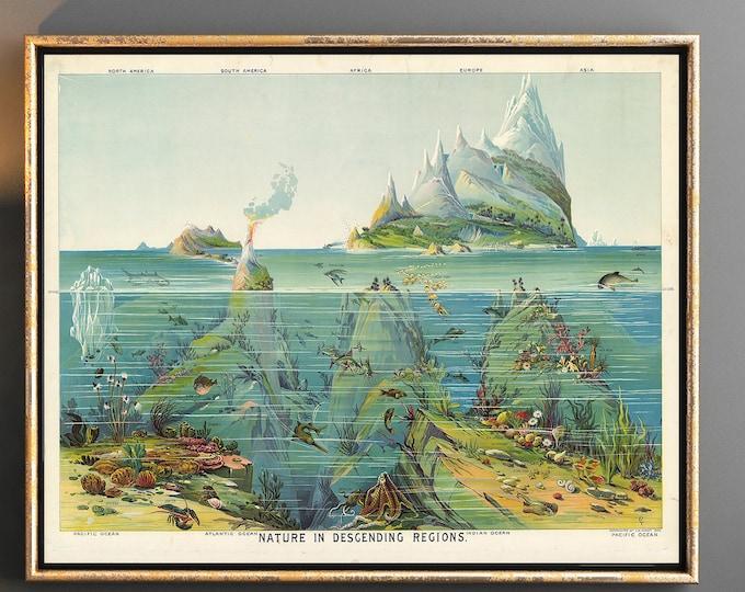 Ocean Poster Sea Life Aquatic Poster Vintage Ocean Wall Art
