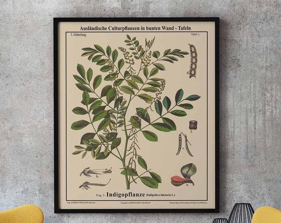True Indigo Poster Indigo Botanical Art Indigo Decor Indigo Art