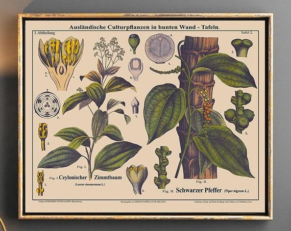 Cinnamon Tree Botanical Art and Black Pepper Botanical Prints Landscape Botanical Poster