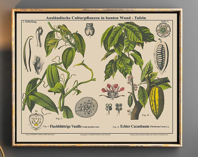 Vanilla and Cacao Plant Botanical Print Botanical Artist Illustration