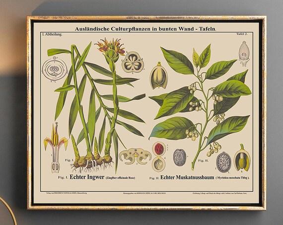 Ginger and Nutmeg Botanical Prints Landscape Botanical Art Landscape Green Decor