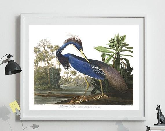 Louisiana Heron Print By John James Audubon Birds of America